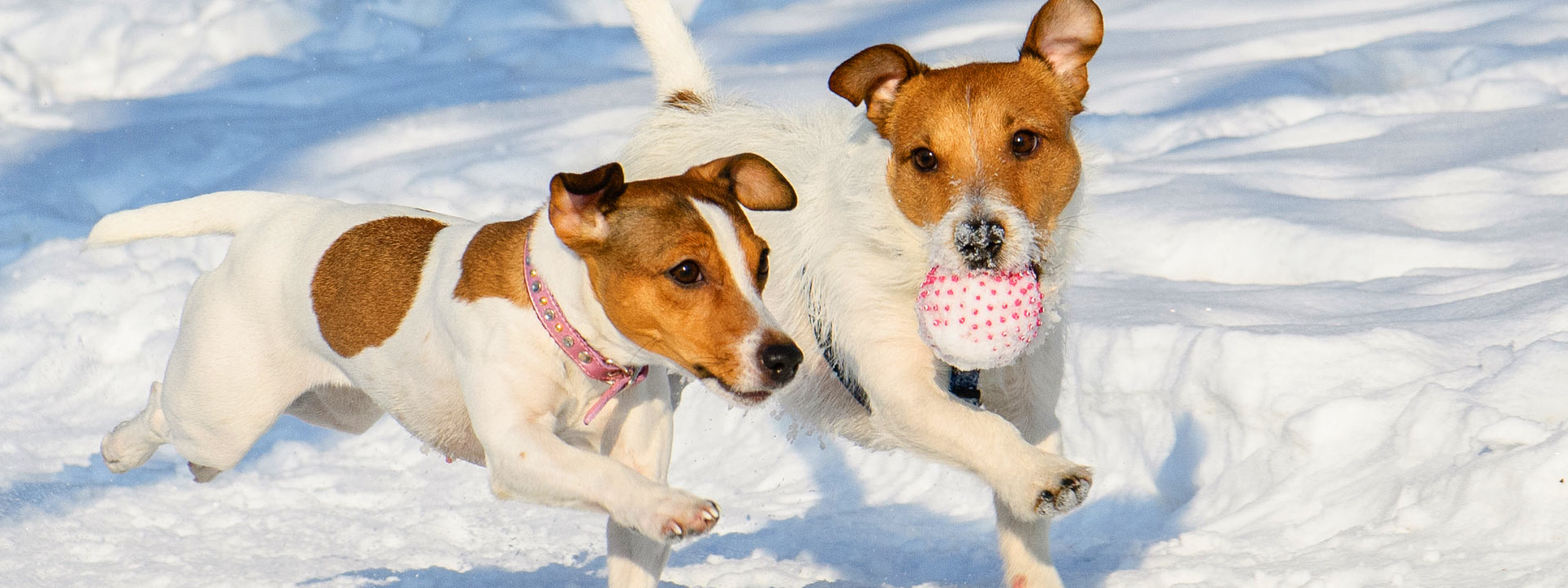 skiurlaub-mit-hund